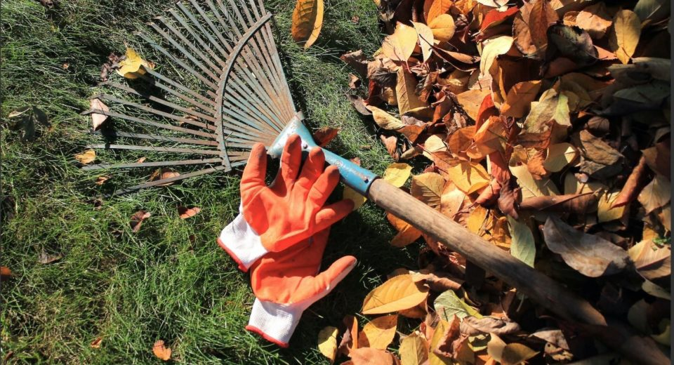 Fall Clean Up